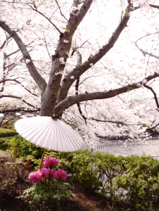 八幡宮 桜と椿